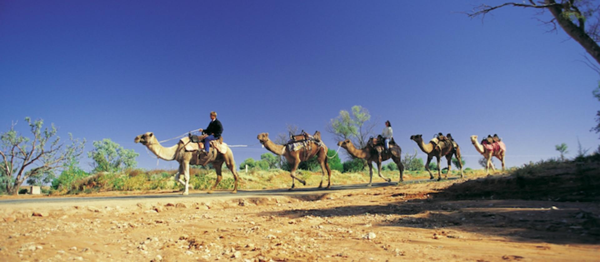 Camel Trek, Silverton near Broken Hill