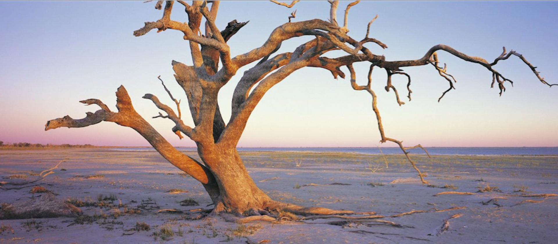 Twisted Tree, Menindee Lakes near Broken Hill