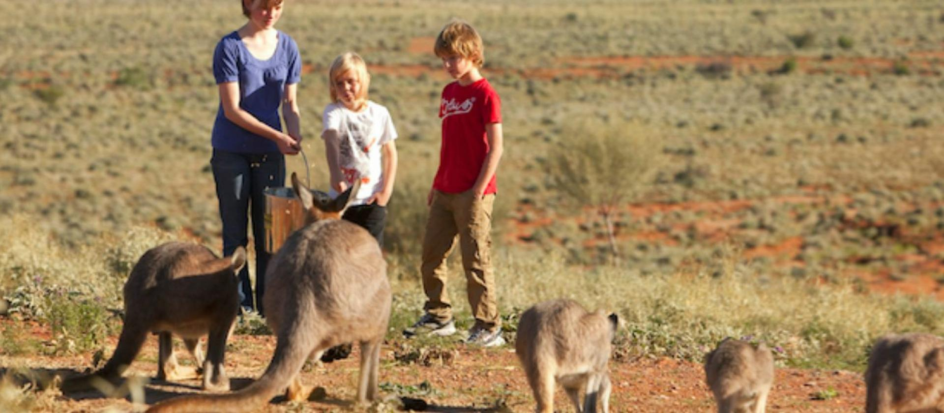 Visitors with kangaroos at Living Desert Sanctuary Broken Hill